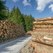 Freshly cut tree logs - Stock Photo