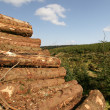 Sustainable Logging With Piles Of Freshly Cut Trees — Photo