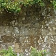 Stone Wall Background With Foliage Edges — Foto Stock