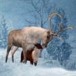 Stock Photo: Reindeer and Fawn Winter Greeting Card