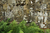 Stone Wall Background With Foliage Edges — Stock Photo