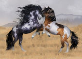 Two Stallions Illustration — Stock Photo