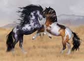 Two Stallions Illustration — Stock Photo