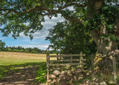 Open Gate Into A green field — Stock Photo