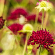 Blurred Summer Flower Background With Bold Red Flower Feature — Foto Stock