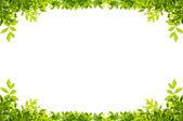 Cadre de feuilles isolé sur fond blanc — Photo