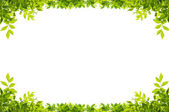 Leaves frame isolated on white background — 图库照片