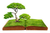 The big tree growth from a book — Stock Photo