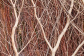 Close up of red brushwood — Stock Photo
