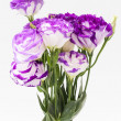 Lisianthus flower — Stock Photo
