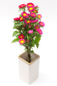 Easter flower — Stock Photo