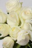 белая роза — Стоковое фото