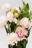 Lisianthus flower — Stock Photo
