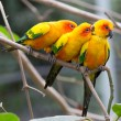 colorful birds — Stock Photo