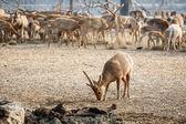 Baby deer — Foto de Stock