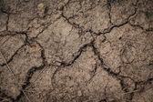 Soil crack — Stock Photo