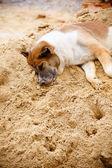 собака сушилка — Стоковое фото