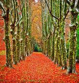 Autumn in Provence — Stock Photo