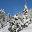 Winter wonderland — Stock Photo #20980051
