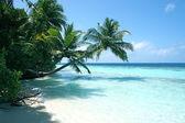 Palmtrees and beautiful beach — Stock Photo