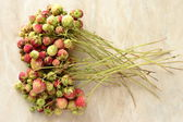 Wild strawberries bundle — Stock fotografie