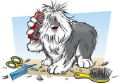 Shaggy Dog Brushing His Far — Stock Vector
