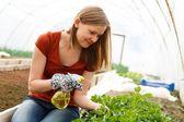 Gardening Work at the Glasshouse — Stock Photo