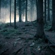 Stock Photo: Mystery forest.