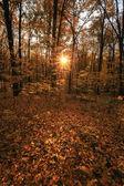 Autumn sunny forest. — Stock Photo