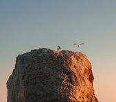 Seagulls on the rocks — Stok fotoğraf