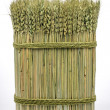 Stock Photo: Sheaf of wheat