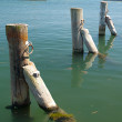 Three mooring posts in water — 图库照片