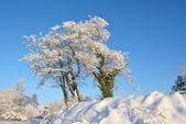 Sole sulla neve coperta di alberi — Foto Stock