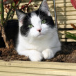 Kitten in a flower bed — Stock Photo #20301213