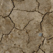 Dry cracked earth — Stock Photo