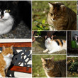 Stock Photo: Cats collage