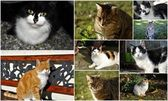 Cats collage — Stock Photo