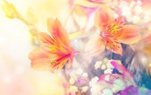 Abstract flower background. flowers made with color filters — Stock Photo