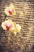 Textured sedge, background with orange and pink orchid — Stock Photo