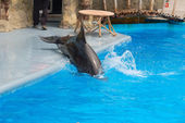 Dolphine slides from scene into water — Stock Photo