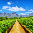 Постер, плакат: Vineyards against awesome mountains