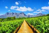 виноградники против удивительной горы — Стоковое фото