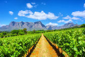 Vineyards against awesome mountains — 图库照片