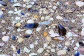 Ghiaia di mare con conchiglie — Foto Stock