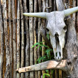 Stock Photo: African bull skull on wall