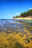 Coral reef next to shore — Stock Photo