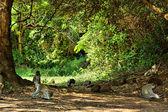 Velvet monkeys and mongooses — Stock Photo