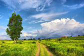 Red sand road through field — Stock Photo