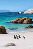 在美丽的海滩上的四个小企鹅 — 图库照片
