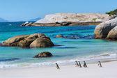 企鹅在阳光明媚的海滩上走 — 图库照片